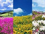 春季必去的中国九大神奇花海