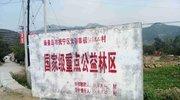 河北抚宁毁松林栽果树 村民:遭破坏有四五百亩