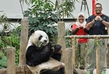 海外熊猫宝宝向世界人民拜年!