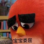 愤怒的小鸟表情包.jpg