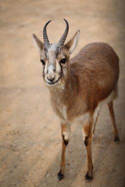 鹿身体全身部位图解