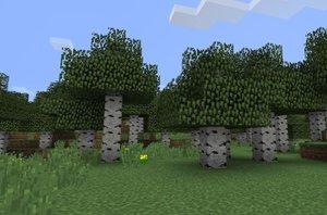 Birch Trees Only.jpg