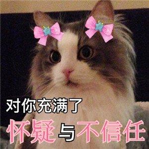 猫咪撒娇表情包8.jpg