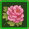 牡丹花.png