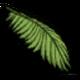 椰树叶.png