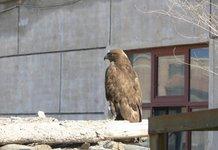 北京10年救护野生动物4万多只