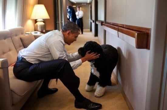 """白宫""""第一宠物"""":美国历届总统和他们的宠物"""