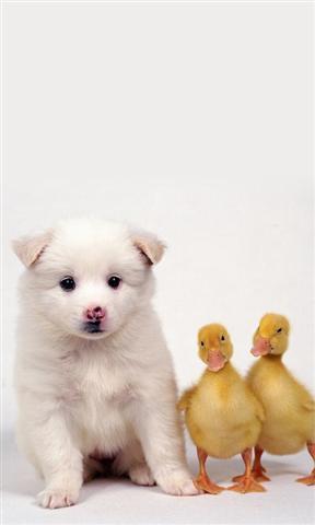 可爱的动物动态壁纸_360手机助手
