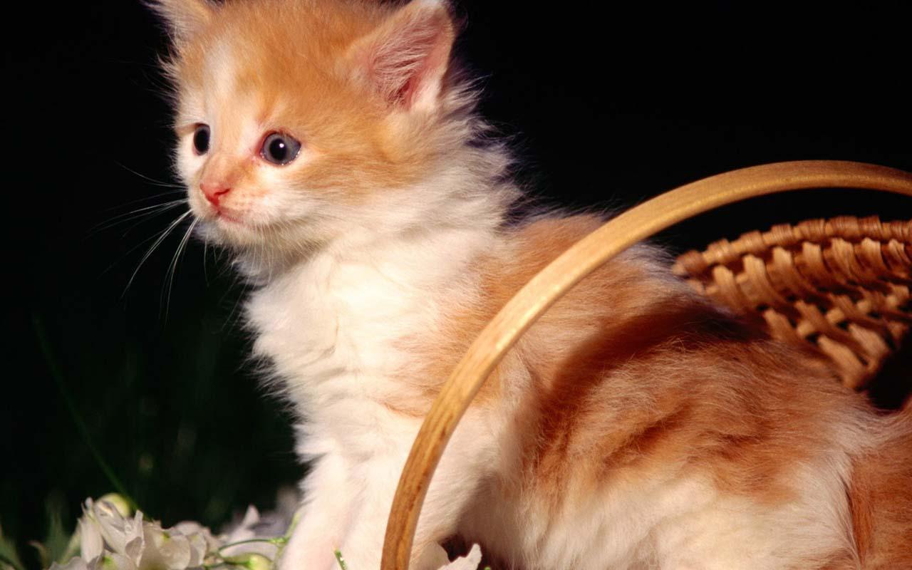 会说话的猫是一个免费的高清壁纸! 可爱的猫改善你的情绪? 有一个突破,并查看了几个小猫的照片! 更多的500可用。 开始你的一天,一个可爱的猫的照片! :) - 特点 - *查看很多猫的照片/壁纸 *设置为墙纸的图像 *保存/查看照片 *分享照片(电子邮件,Facebook,Twitter的,彩信) *你喜欢最喜欢的图片 *接收通知,当新的壁纸上传(可以在设置中关闭) *平板支持 *上传您的照片! (经批准后会出现在应用程序) 真棒猫的背景! 您可以从我们的帐户很多精彩的动态壁纸选择,我们相信,你可以找到