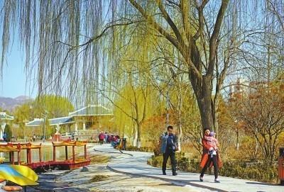 兰州市植物园的柳树吐出嫩芽,传递出春的消息.