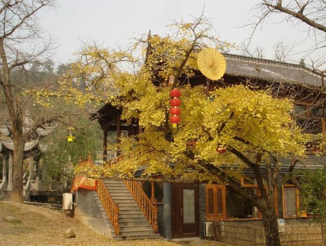 生活 > 正文   妥乐古银杏风景区是贵州省级风景名胜区之一,这里流水