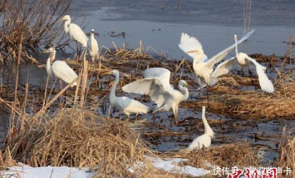 """中俄界湖迎来大批""""北迁""""候鸟 比往年早10天"""