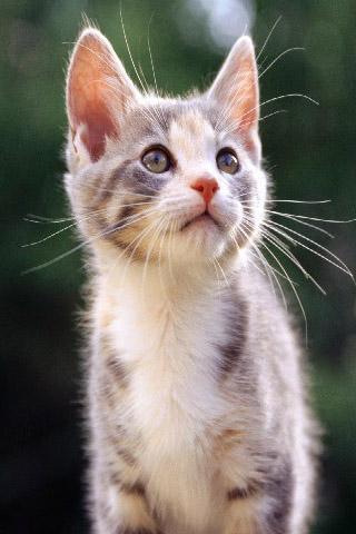 可爱猫咪壁纸3_360手机助手