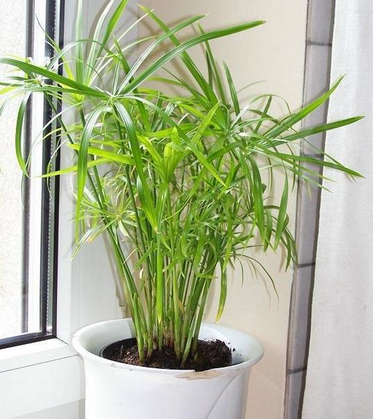 有哪些适合室内种植的耐阴植物