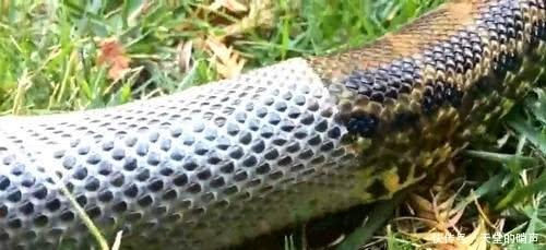 """老人说看到蛇脱皮会有不好""""预兆"""",有科学依据吗?专家:很危险"""