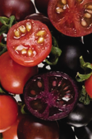 西红柿点花技术图解