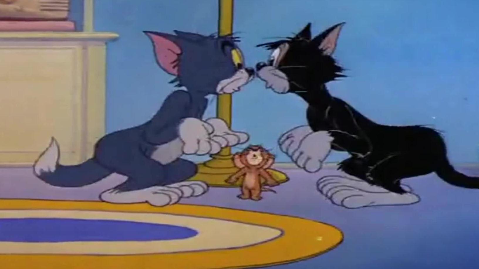 两只猫决斗,汤姆刷花头,想要偷袭黑猫!