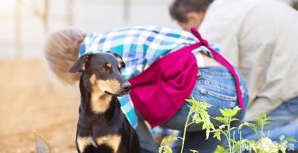 当狗狗去世的时候,主人应该做的4件事情,不要留下遗憾!
