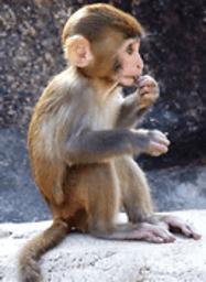 2013-01-07 分享到: 精彩图集 游戏详情 看图识动物是一款儿童教育图片