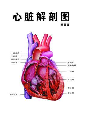环节动物的心脏