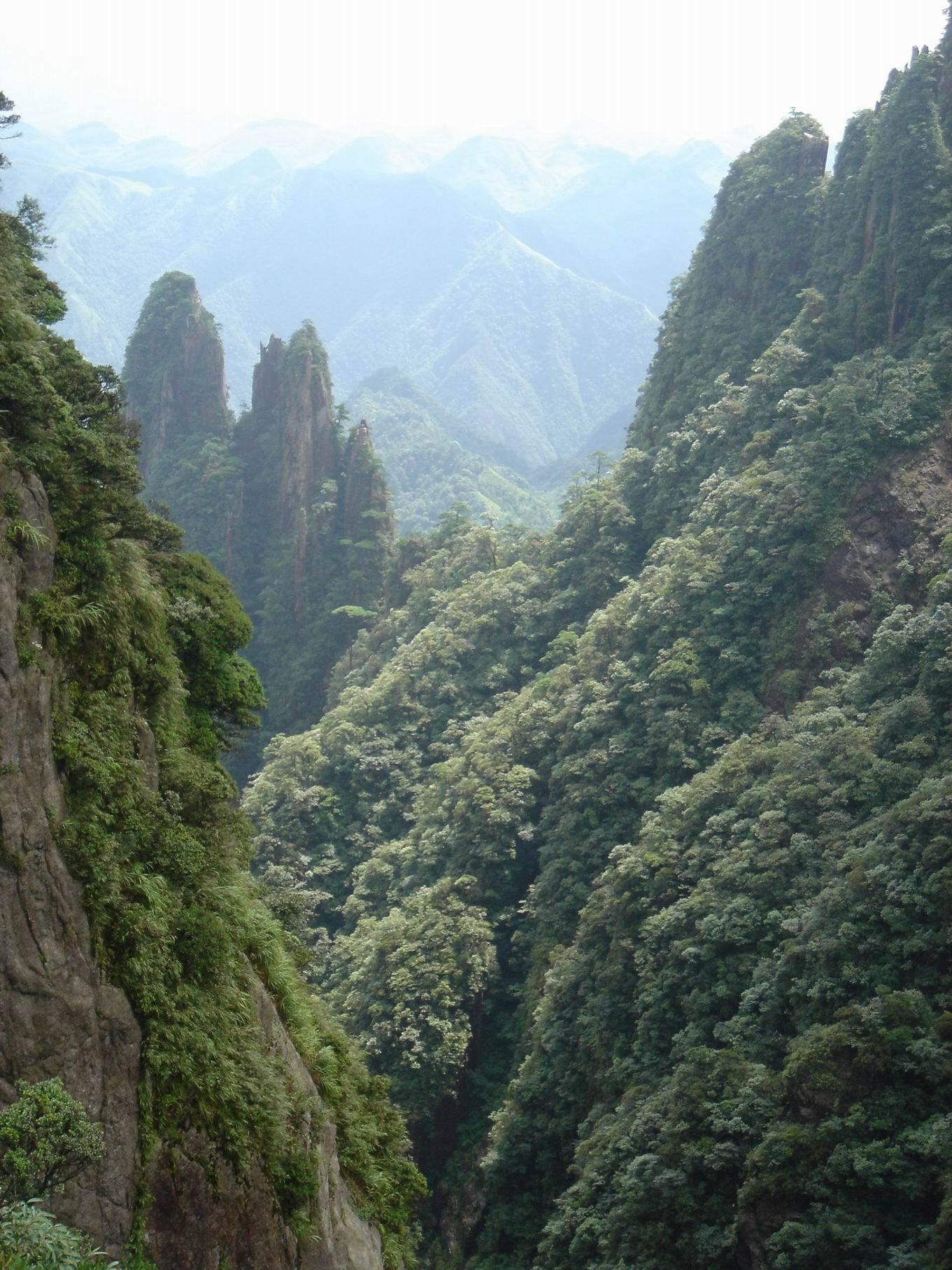 西双版纳国家森林公园图片
