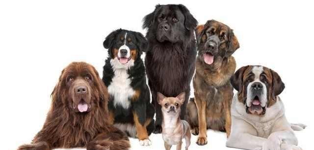 愚昧无知害死狗,必须科学喂养!宠狗挑食是有原因的