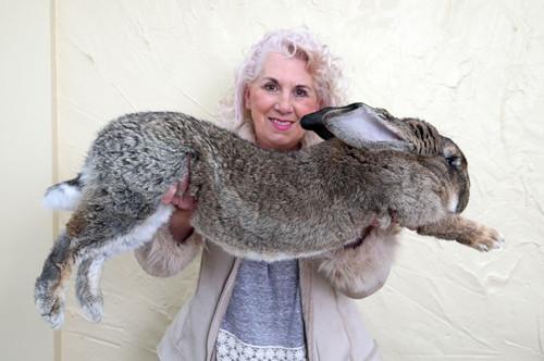 美联航又出危机:有望破世界纪录的巨兔乘机时神秘死亡 -  - 真光 的博客