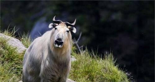 男子跟朋友相约一起去爬山,在登山时竟然偶遇一个十分神秘的动物