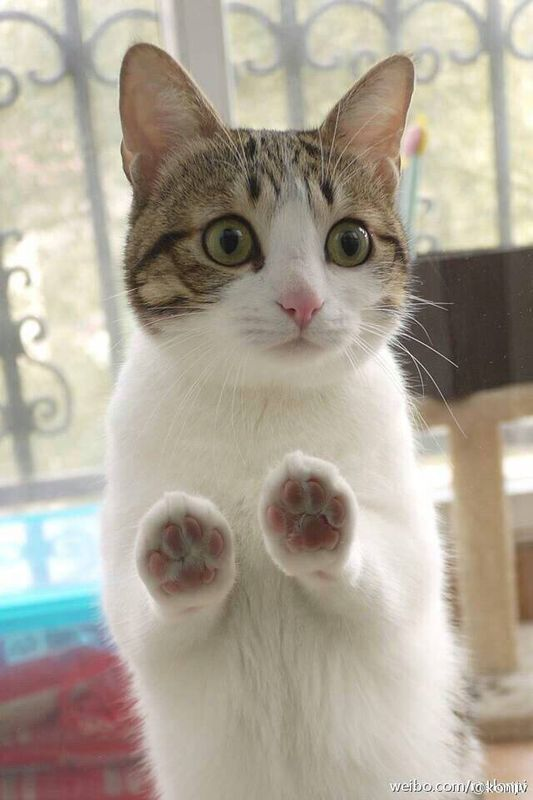 原来猫咪还可以这样玩,手机上又多了一大批表情包图片