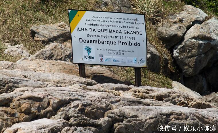 每75平米就有一条!这个小岛被几千条蛇占据,广东朋友馋哭了?