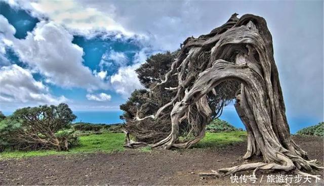 世界各地最奇怪的树在中国,被称为生命的奇迹