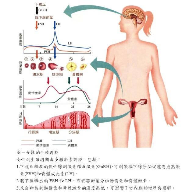 器官结构及其生理功能