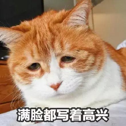 小猫咪图片不开心猫 (400x_表情大全