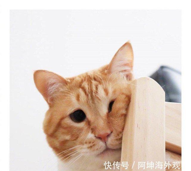 有一只橘猫算了关键,胖也就走红,网络圣诞你了表情包礼物求是还长着图片