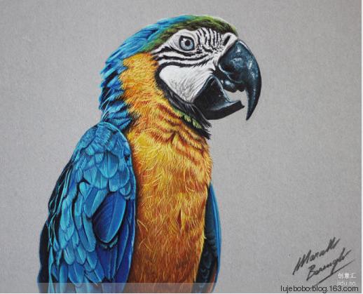 彩铅绘画之老虎彩铅画画法视频