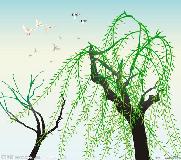 柳树怎么画,要简笔