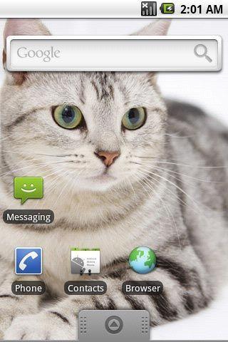 超可爱小猫咪第三辑主题壁纸