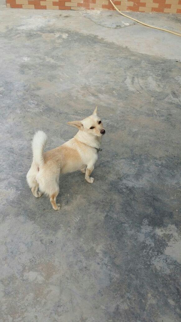 2013.06.10 谁帮我看看这只狗是不是拉布拉多,我怎么看着好像土.