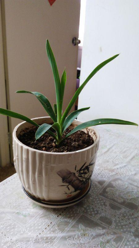 请问这是什么植物?适合室内种植吗?