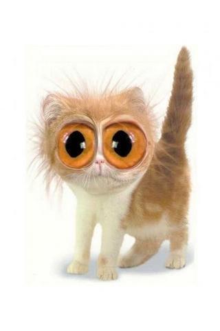 壁纸 动物 猫 猫咪 小猫 桌面 320_480 竖版 竖屏 手机
