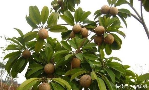 海南水果到底有多好吃,可谓是食客最不挑的水果了
