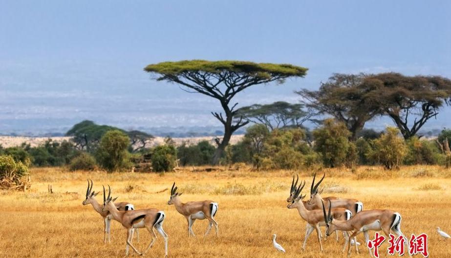 非洲大陆的绝美风情 大自然的魅力在此展露无遗