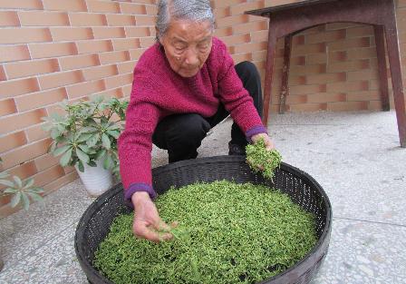 地主并不都是坏的人,86岁奶奶一起做明前茶,听老故事 - 真光 - 真光 的博客