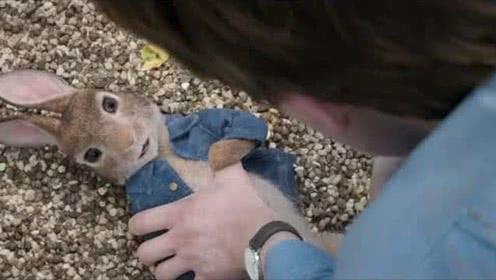《彼得兔》男子用炸弹对付兔子,这个方法是他无奈的选择