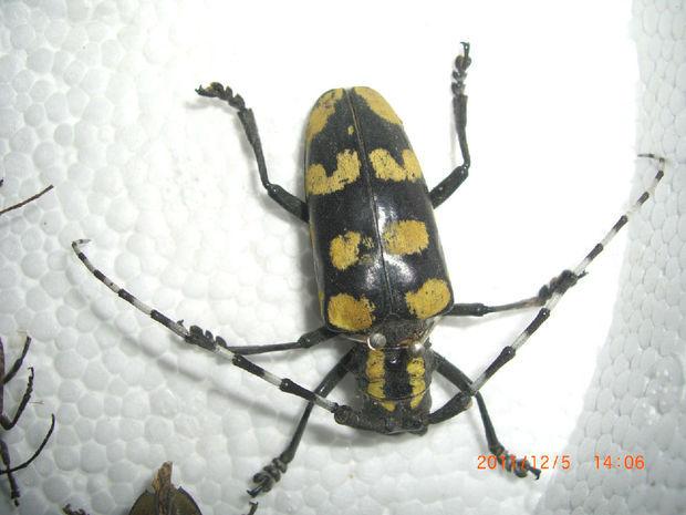 这是什么虫子?_360问答