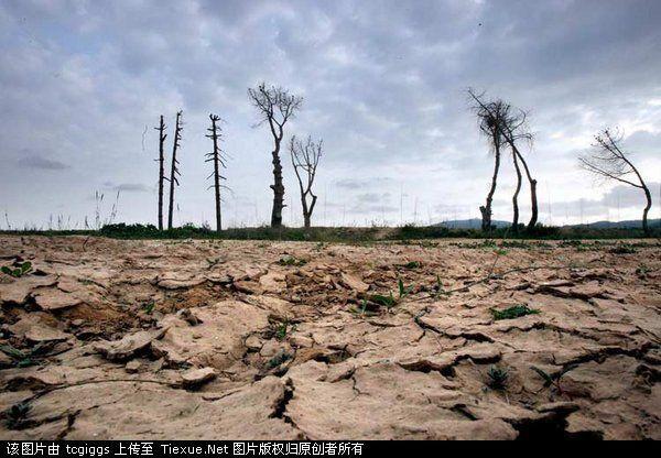 环境污染 野生动物