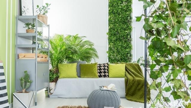 别再把绿植放在地上?学着这样摆放,帮你打造美丽房间