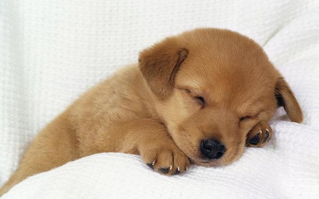 求可爱狗狗的品种