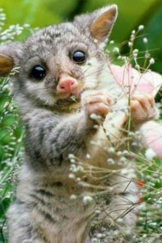 可爱小动物壁纸软件内包含了许多精美