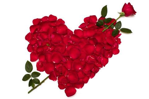 玫瑰牡丹动态壁纸
